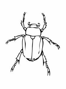 colorear escarabajo