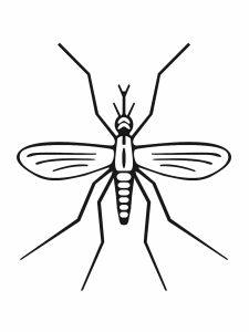 colorear insecto