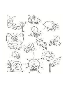 mariposas y bichos colorear