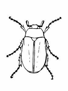 colorear insectos 4