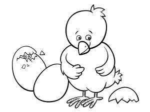 colorear pollitos 24232