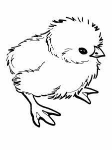 colorear pollito