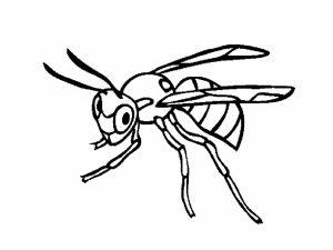 colorear insectos 1