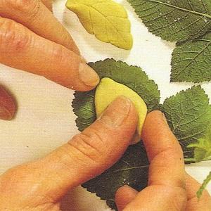 hojas de pasta de sal