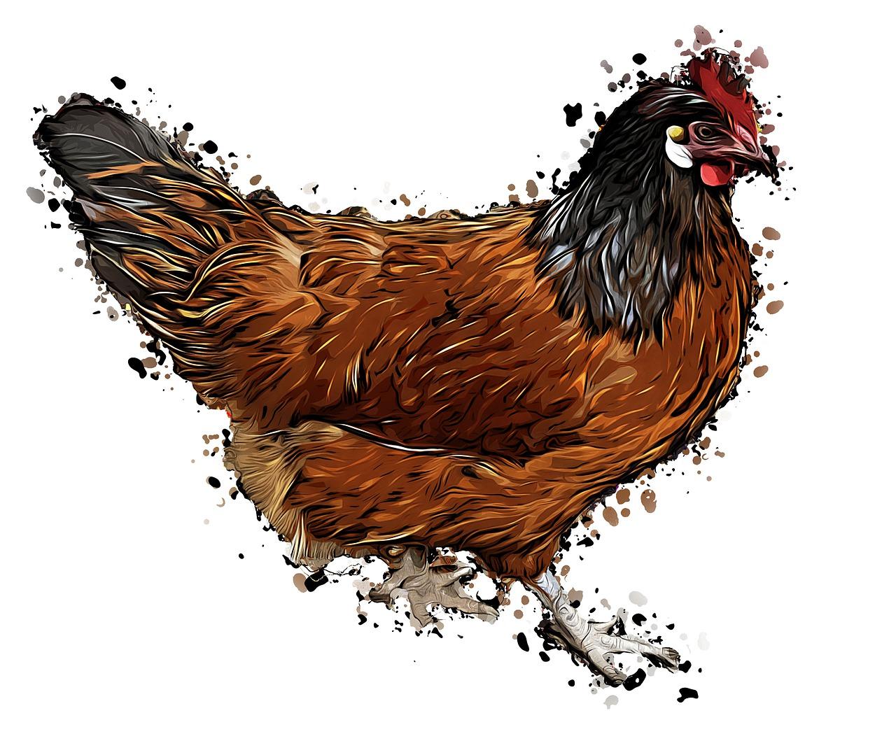 gallos para colorear