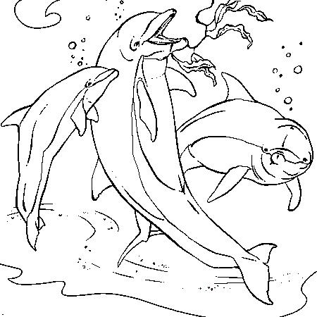 Delfines para imprimir y colorear 21