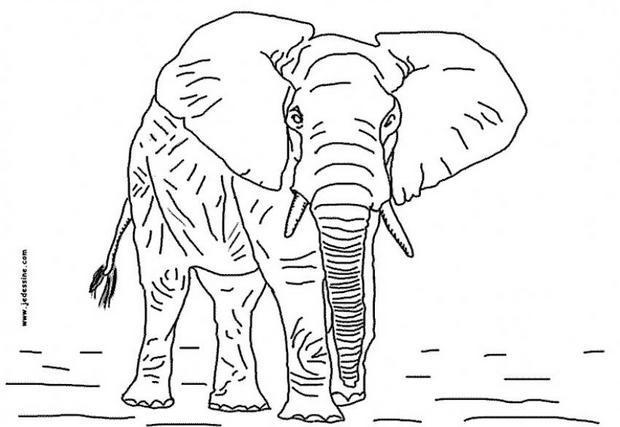 Elefantes para imprimir y colorear 2