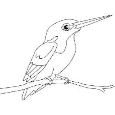Pájaros para colorear 3