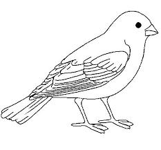 Pájaros para colorear 16