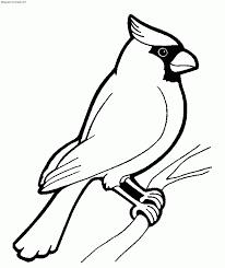 Pájaros para colorear 9