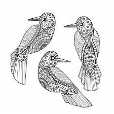 Pájaros para colorear 21