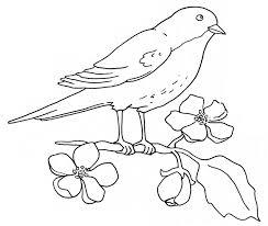 Pájaros para colorear 11