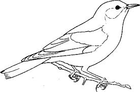 Pájaros para colorear 12
