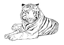 Tigres para colorear 18