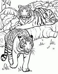 Tigres para colorear 23