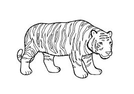 Tigres para colorear 24