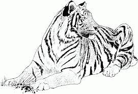 Tigres para colorear 2