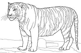 Tigres para colorear 6